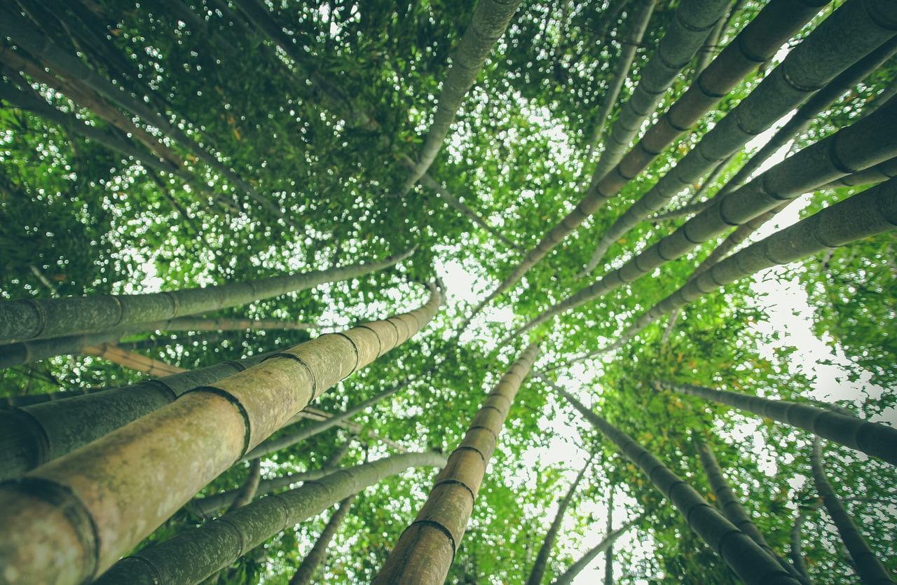 etericky olej zeleny bambus